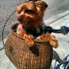 Happy in a Basket